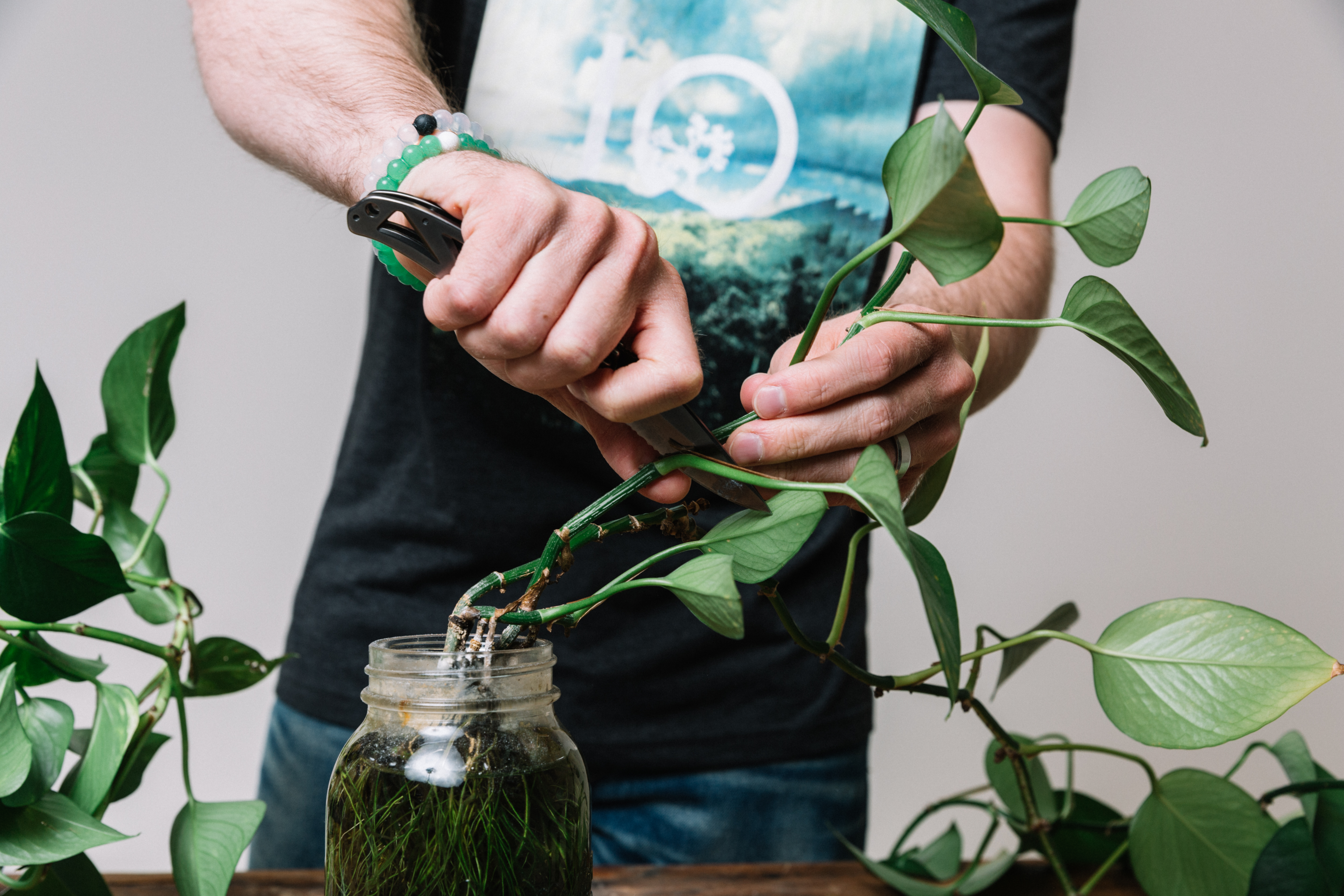 Jake is propagating a plant using his pocket knife and wearing his Lokai balance bracelets.