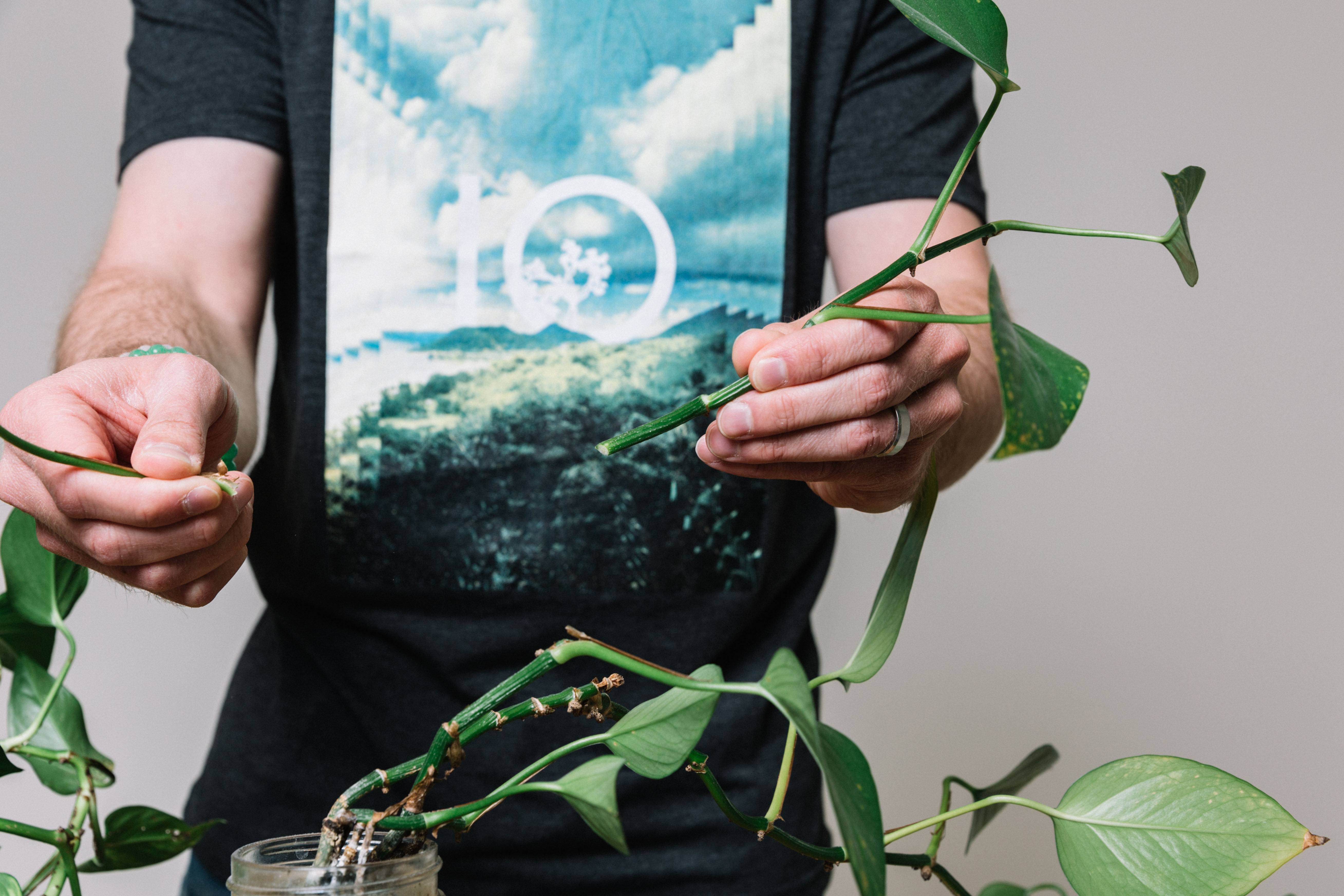 A close up of Jake's tentree tee and plant.