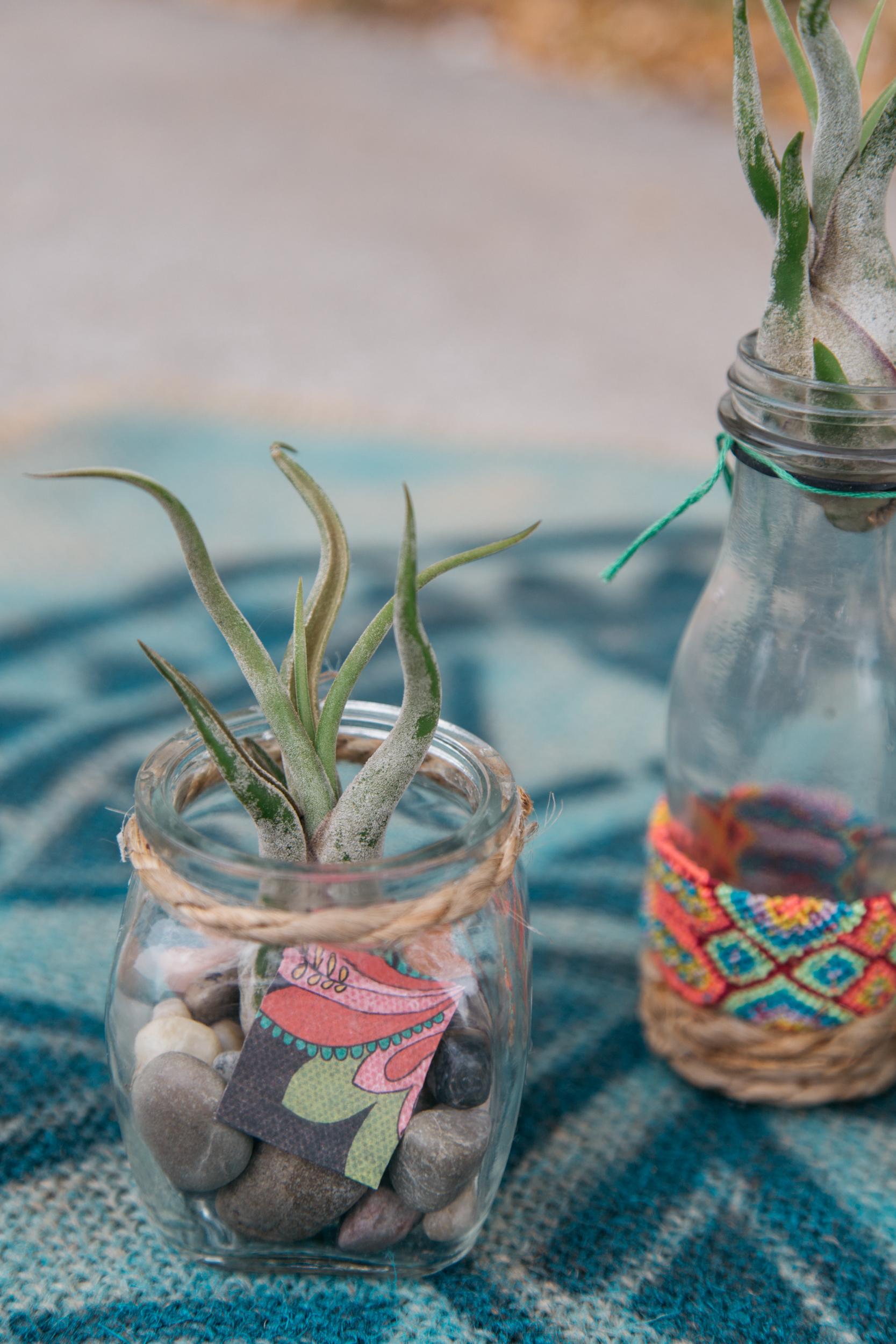 Air plants in cute jars.